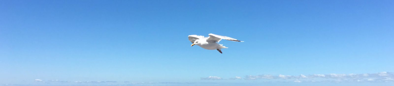 De vogel als projectiel