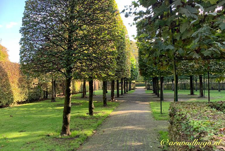 Bomenrij in het Amstelpark