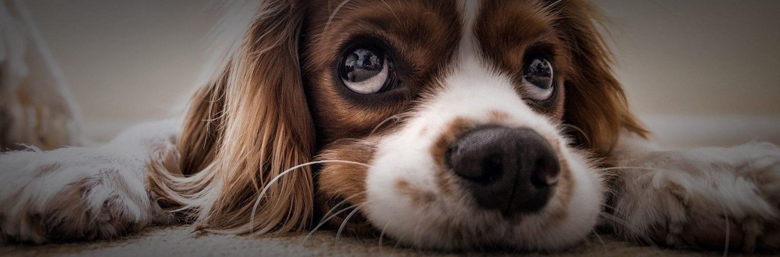 Blindengeleidehond wordt emotioneel